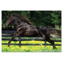 500 pcs - Galloping - Genuine (by Educa)