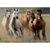 Jigsaw puzzle 1000 pcs - Wild Horses (by Nathan)