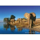 Jigsaw puzzle 1000 pcs - Thirsty Elephants - Alexander von Humboldt (by Heye)