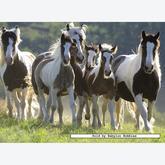 Jigsaw puzzle 500 pcs - Galloping Horses (by Ravensburger)