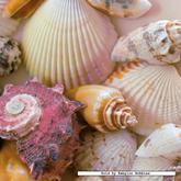 500 pcs - Shells - Square (by Ravensburger)
