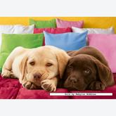 Jigsaw puzzle 1000 pcs - Cute Puppies (by Ravensburger)