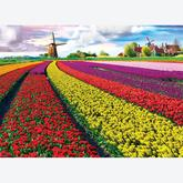Jigsaw puzzle 1000 pcs - Tulip Fields Netherlands (by Eurographics)
