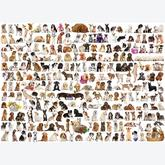 1000 pcs - The World of Dogs (by Eurographics)