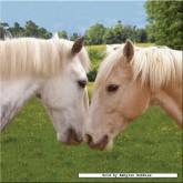 500 pcs - Horse Love - Square Heart (by Ravensburger)