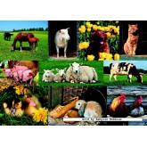 Jigsaw puzzle 1000 pcs - Farm Animals (by Jumbo)