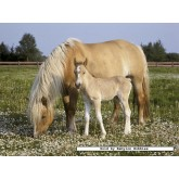 Jigsaw puzzle 250 pcs - Mare and her baby (by Nathan)