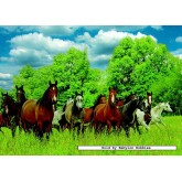Jigsaw puzzle 1000 pcs - Wild Horses in the Field (by Jumbo)