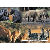 Jigsaw puzzle 1000 pcs - BBC Earth Life Animal Families (by Jumbo)