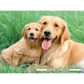 Jigsaw puzzle 1500 pcs - Retriever Family (by Ravensburger)