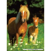 300 pcs - Happy Horses - XXL (by Ravensburger)
