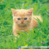 49 pcs - Cute Kittens (3x) (by Ravensburger)