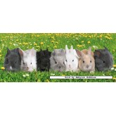 200 pcs - Bunny parade - XXL (by Ravensburger)